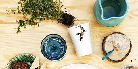 Dishware, Turquoise, Teal, Serveware, Photography, Kitchen utensil, Circle, Paint, Teacup, Herb,