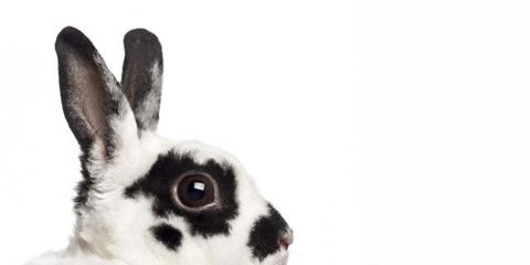 Rabbit, Skin, Domestic rabbit, Rabbits and Hares, White, Style, Organ, Iris, Neck, Black,