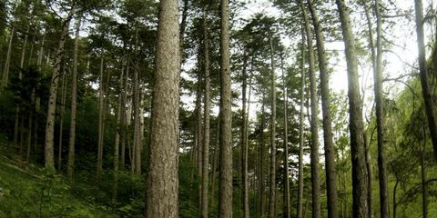 Natural environment, Plant, Forest, Old-growth forest, Woodland, Nature reserve, Woody plant, Grove, Trail, Terrestrial plant,