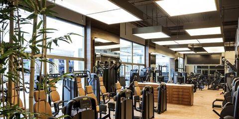 Hardwood, Exercise machine, Exercise equipment, Gym, Houseplant, Machine,