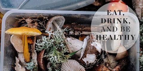 Edible mushroom, Shiitake, Mushroom, Champignon mushroom, Agaricus, Bolete, Organism, Matsutake, Russula integra, Pleurotus eryngii,